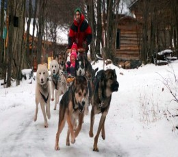 Ushuaia - Mini Aventura e Neve com Trenó