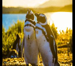 Ushuaia - Caminhada com Pinguins + Navegação Verão